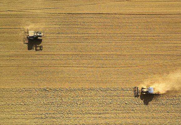 Time for Harvest!